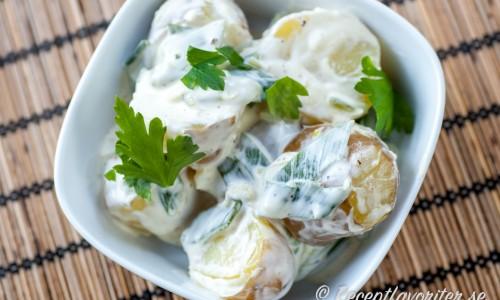 Aiolipotatis - kokt potatis i vitlöksmajonnäs - en slags potatissallad för dig som gillar vitlök - och potatis.