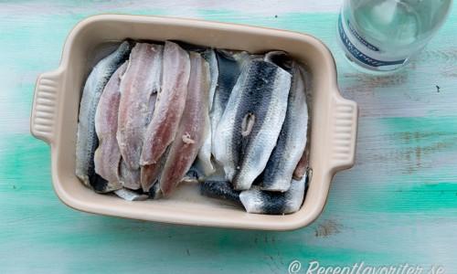 Sillen gravas i salt, socker, ättika och olja i form