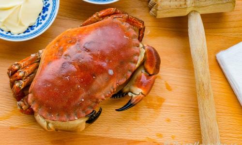 Kokt krabbtaska till gratinerad krabba