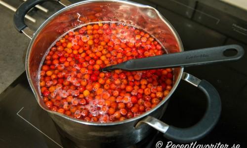 Rönnbären kokas till saften