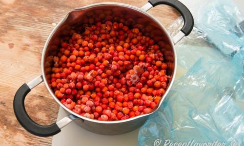 Rönnbären fryser man innan man gör saft på dem eller plockar efter första frosten.