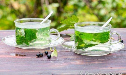 Gör ett te med vinbärsblad och garnera gärna med lite färska vinbär också.