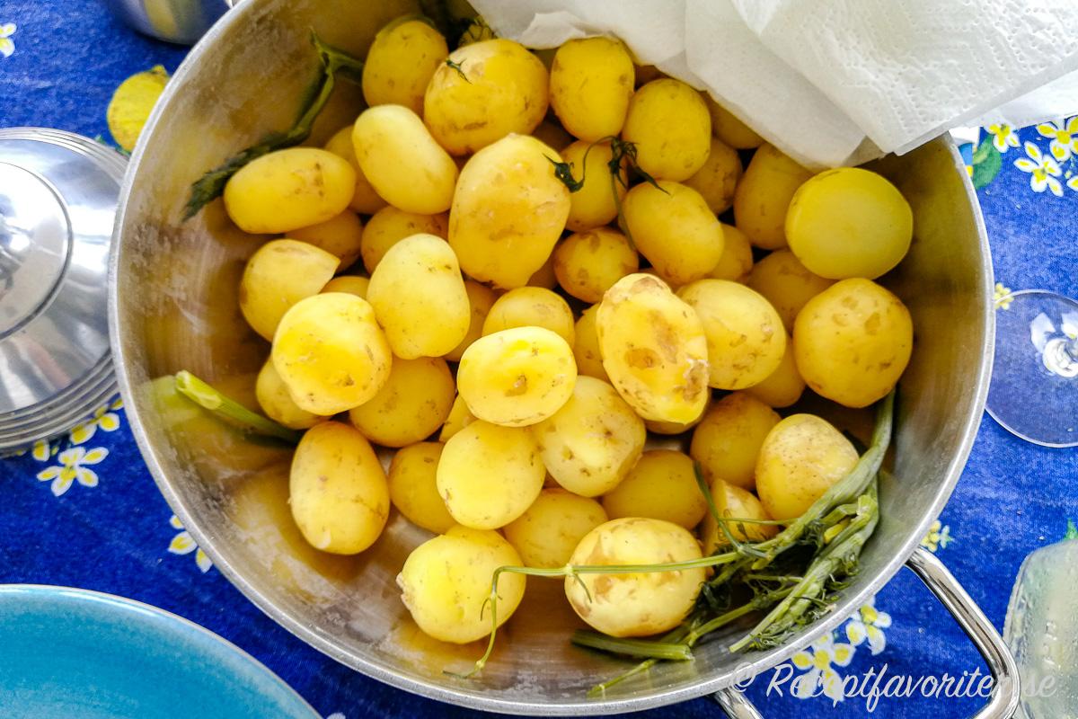 Färskpotatisen till midsommar. Spara gärna några stjälkar från dillen när du plockar den och koka med potatisen för extra god smak.